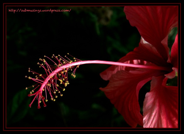 Tropical Red Flower
